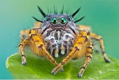 Spider Ugly Animals Cat Animal Wallpapers Scary