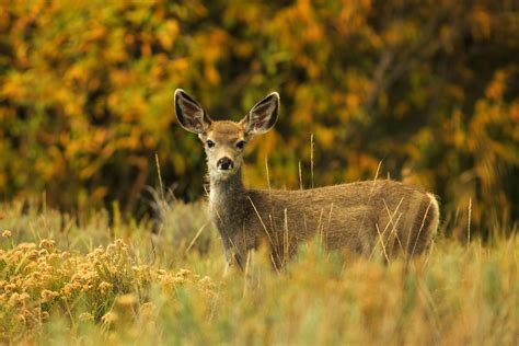 Health Officials Are Worried That 'zombie Deer Disease