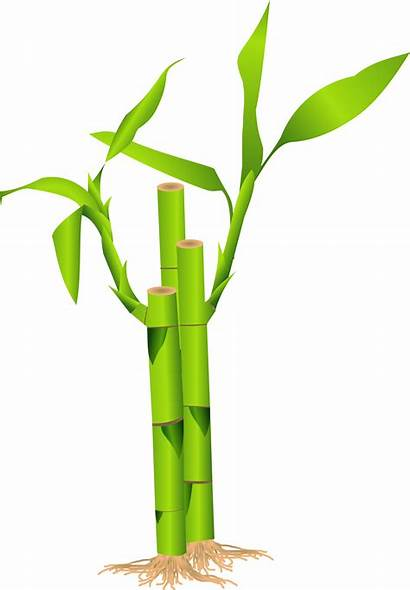 Bamboo Border Clip Cliparts Clipart Attribution Forget