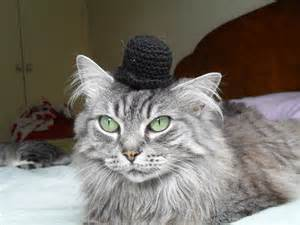 hats for cats chaplin bowler cat hat by thecatshat on etsy