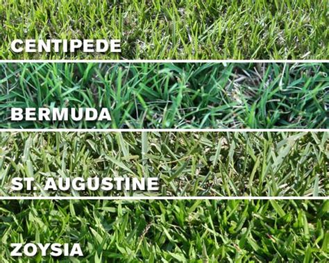types of grasses 15 best ideas about types of grass on pinterest garden grass drought tolerant grass and grass