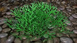 3d Riccia Plant Leaf