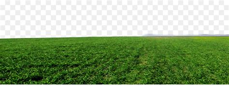 Crop Lawn Grassland Artificial Turf Land Lot