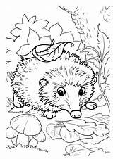 Coloring Hedgehogs Hedgehog Printable Activity Fall Funny sketch template