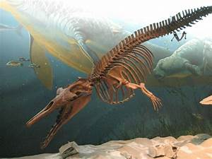 GEOL 204 The Fossil Record: Drawing Out Leviathan: The ...