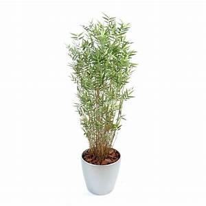 Bambous En Pot : bambou pot prix ~ Melissatoandfro.com Idées de Décoration