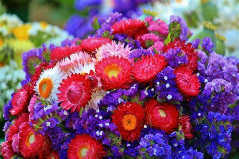 fiori con la u sognare fiori significa interpretazione e numeri al