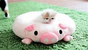 cute kittens gifs | WiffleGif