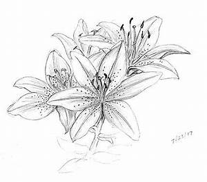 lily flowers drawings | Pencil | Flower pattern drawing ...