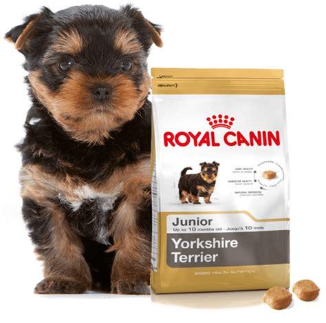 royal canin yorkshire terrier junior kg internetowy