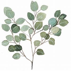 Silver Dollar Eucalyptus Painting by Garima Srivastava