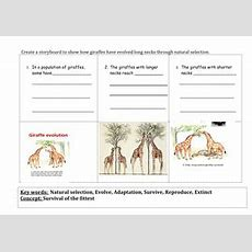 Natural Selection, (survival And Extinction) And Evolution By Sreeelm  Teaching Resources