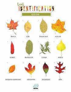 Leaf Identification Game IMom