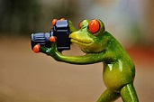 Free photo: Frog, Photographer, Funny, Fun - Free Image on ...