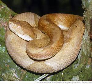 Is Treasure Quest's Snake Island a real island? Is Mehgan ...