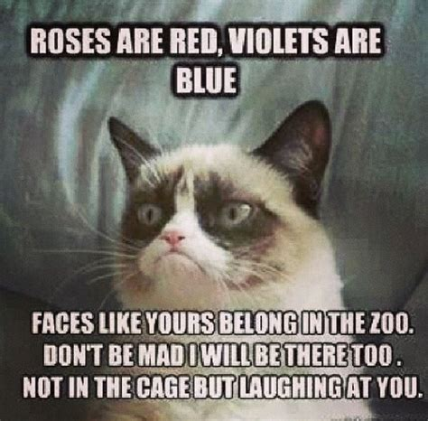 cat grumpy quotes laugh funny hard why did meme jokes cats uploaded