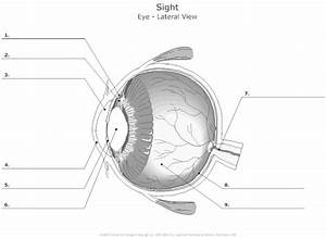 The 25  Best Human Eye Diagram Ideas On Pinterest