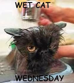 Wet Cat Meme - can we have a new witch ours melted wet cat wednesday