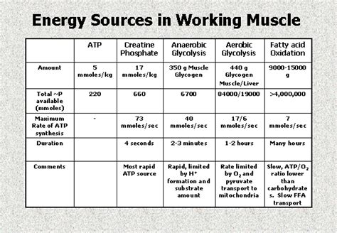 Work And Energy In Muscles