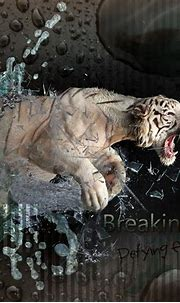 Animal White Tiger | wallpaper.sc SmartPhone