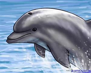 How to Draw a Jumping Dolphin, Step by Step, Sea animals ...
