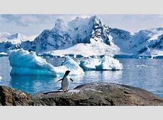 La Antártida se está volviendo verde a causa del cambio