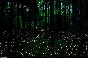Tennessee Fireflies Light Up The Night Sky In The Smoky