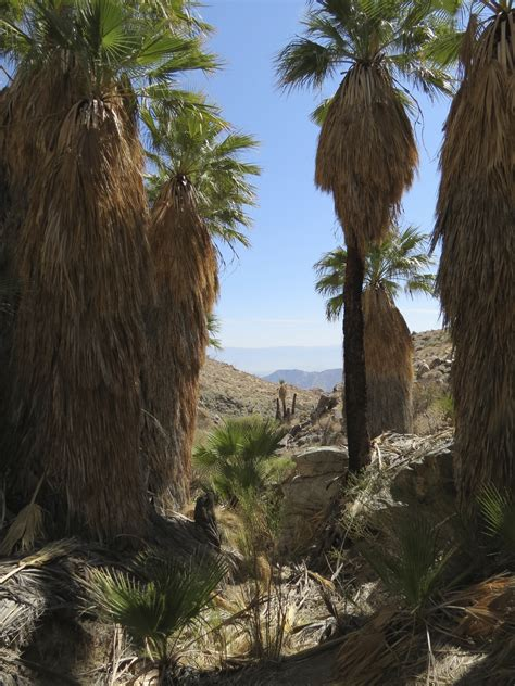 la quinta cove hikes bear creek canyon oasis trail