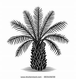 Palm Oil Stock Images, Royalty-Free Images & Vectors