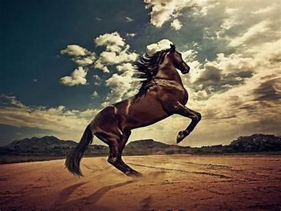 Horse Rising Wallpapers Horses Normal Backgrounds Desktop