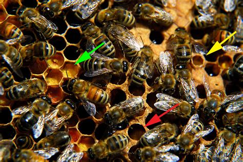 hive inspection brood  burr comb curbstone valley