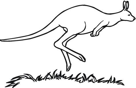 kangaroo pictures  color   clip art