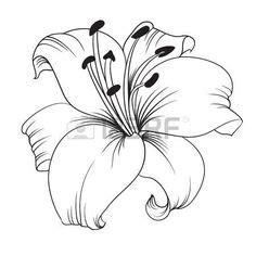 lilie vorlage wei 223 e lilie auf einem wei 223 en hintergrund karte mit bl 252 henden lilien vektor illustration