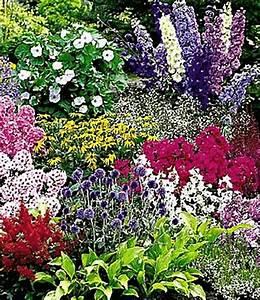 Weidenruten Zum Pflanzen Kaufen : buntes staudenbeet multi colour top pflanzen online ~ Lizthompson.info Haus und Dekorationen