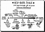 Acids and Bases | Publish with Glogster!