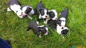 Cute Puppy Litter