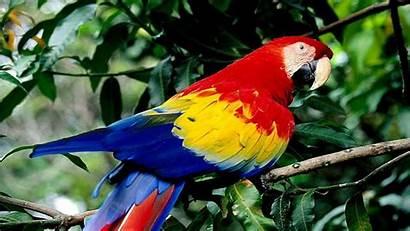 Birds Exotic Bird Wild Wings Animal Desktop