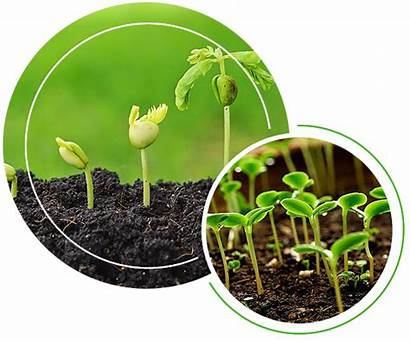 Growth Plant Affect Factors Plants Grow Things