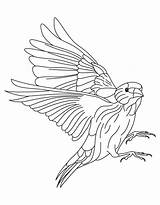 Goldfinch Coloring American Drawing European Willow Eastern Template Pages Sketch Colouring Getdrawings Popular sketch template