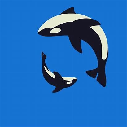 Animated Whale Orca Killer Gifs Animals Dolphins