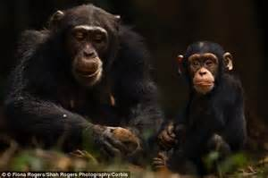 Human and Chimpanzee Chromosomes