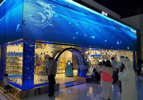 dubai mall aquarium aquaria news mat lss