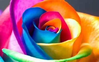 Rose Colorful Wallpapers Rainbow Roses Bg Desktop