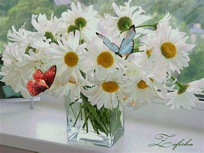 Animated Daisies Flower Butterflies Gifs Flowers Butterfly
