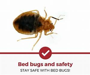 Bed bugs and safety stay safe pest strategies for Bed bug safety