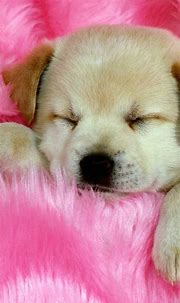 Cute Puppies Phone Wallpapers - Wallpaper Cave