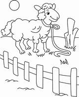 Fence Coloring Behind Sheep sketch template