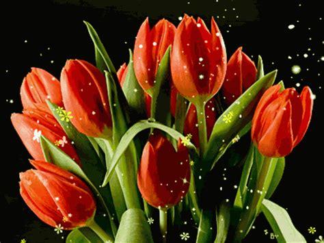 decent image scraps tulips animation