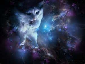 are violets poisonous to cats spacecat violet wallpapers by alkven on deviantart