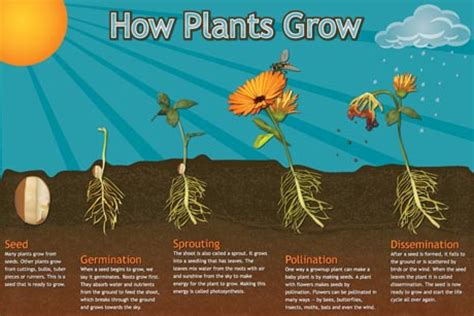 seeds and plants inventors of tomorrow